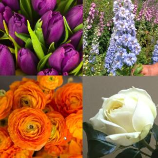 Fleurs coupées/bouquets